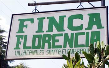 グァテマラ フロレンシア農園 ティピカ