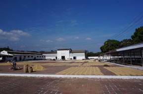 エルサルバドル ラ・レフォルマ農園 ブルボン