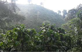 エルサルバドル ロスアンデス クンプレ農園