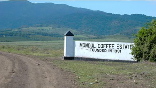 タンザニア モンデュール農園 AA
