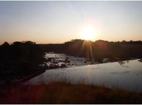 ザンビア NCCL農園 ハニー